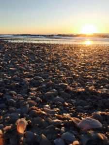 The shells on Eighty Mile Beach